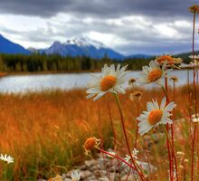 Wild about Daisy by JamesA1