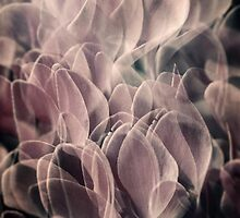 Cyclamen 3 by maxblack