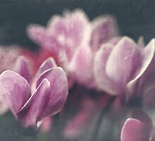 Cyclamen 5 by maxblack