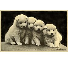 No - we are not Polar Bears .. Photographic Print