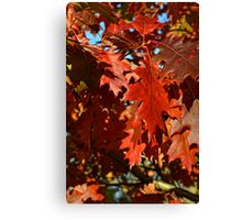 Autumn leaves in the wind #2 Canvas Print