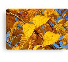 Autumn leaves in the wind #3 Canvas Print