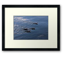 Almost Synchronized Swimming  Framed Print