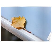 Leaf on the roof of a Trabant, Poster
