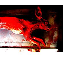 Run Rabbit Run Photographic Print
