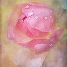 sugar rose by Teresa Pople
