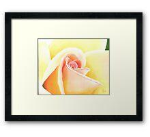 Peach Rose Framed Print