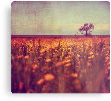 lying in a field of daisies Metal Print