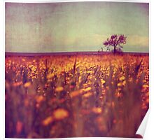 lying in a field of daisies Poster