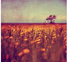 lying in a field of daisies Photographic Print