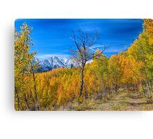 Colorado Fall Foliage Back Country View Canvas Print