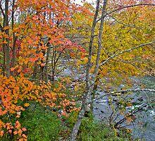 Perkiomen Creek - Perkiomenville PA - Autumn Foliage by MotherNature
