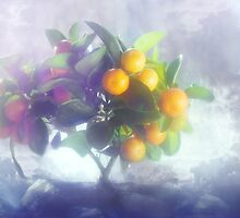 Tangerine's tree by zadverie