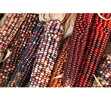 Colors of Corn Photographic Print
