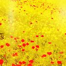 Poppy Field  by LAURANCE RICHARDSON