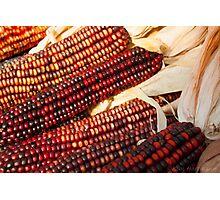 Colors of Corn 2 Photographic Print