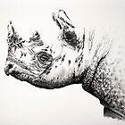 Black Rhino portrait 2 by Paul Fearn