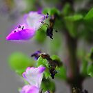 Tiny Flowers by Craig Forhan