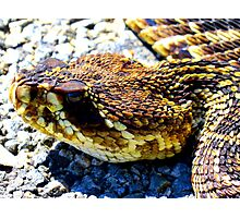rattlesnake face Photographic Print