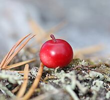Cowberry from norwegian mountains.  by MQ20