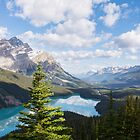 Peyto Lake Tree by Pam Hogg