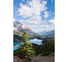 Peyto Lake Tree Photographic Print