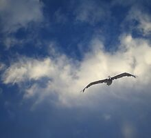 Soaring Among the Clouds by David Denny