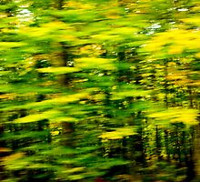 New England Autumn Abstract #42 by pjphoto181