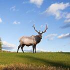 Elk on Hillside by Delmas Lehman