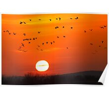 Snow Geese Fly into Sunrise Poster