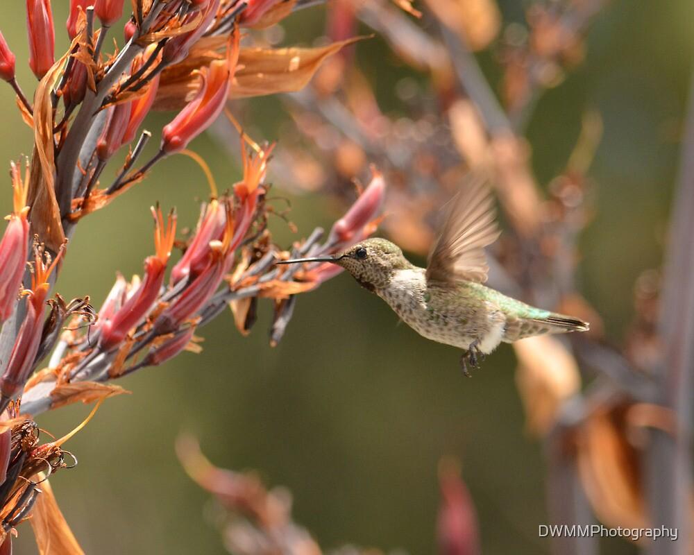 In Flight Meals by DWMMPhotography