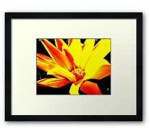Touch of colour Framed Print