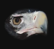 Wedge Tailed Eagle by Jacob Thirkettle
