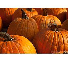 Pumpkin Patch 2 Photographic Print