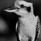 Kookaburra Black & White by odarkeone