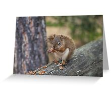 Jasper Squirrel Greeting Card