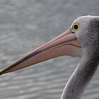 Pelican Head by odarkeone