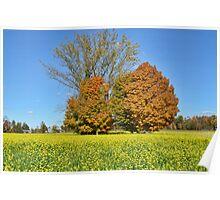 Autumn contrast colours Poster