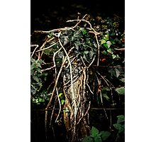 Reclaimed by Nature Photographic Print