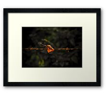Leaf on Wire Framed Print