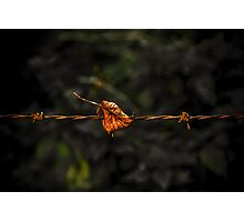 Leaf on Wire Photographic Print
