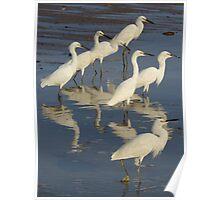 herons - garzas Poster