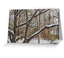 Snow-Covered Branches Greeting Card
