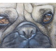 Pug face Photographic Print