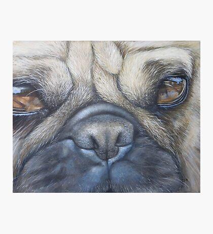 Pug face Photographic Print