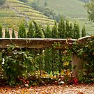 Scenes of Autumn by Rae Tucker
