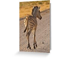 Zebra foal with side-lighting Greeting Card
