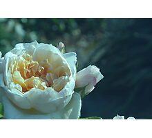 Pale Blue Rose Photographic Print