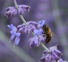 Bee & lavender by HeloiseDiez