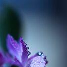 Purple Passion by Tara Lemana